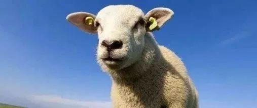 羊毛出在狗身上,让猪来买单